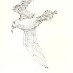 Bird from Under