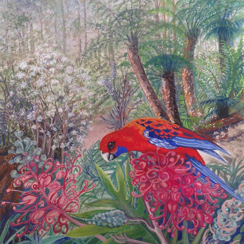 Jan Parish  A jewel from the forest (Crimson Rosella) 23x29cm  Gouache on paper (Frame 32x42cm)  $900