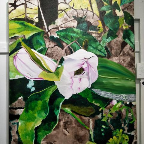 Sandra Messner  Magnolia Bud 65x75cm Oil on canvas  $600