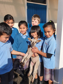 Little Lamb helpers