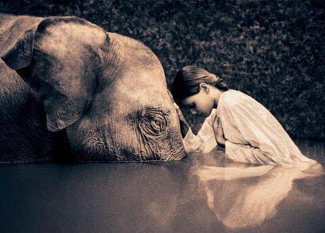 You are Compassion