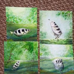 illustrations for archerfish