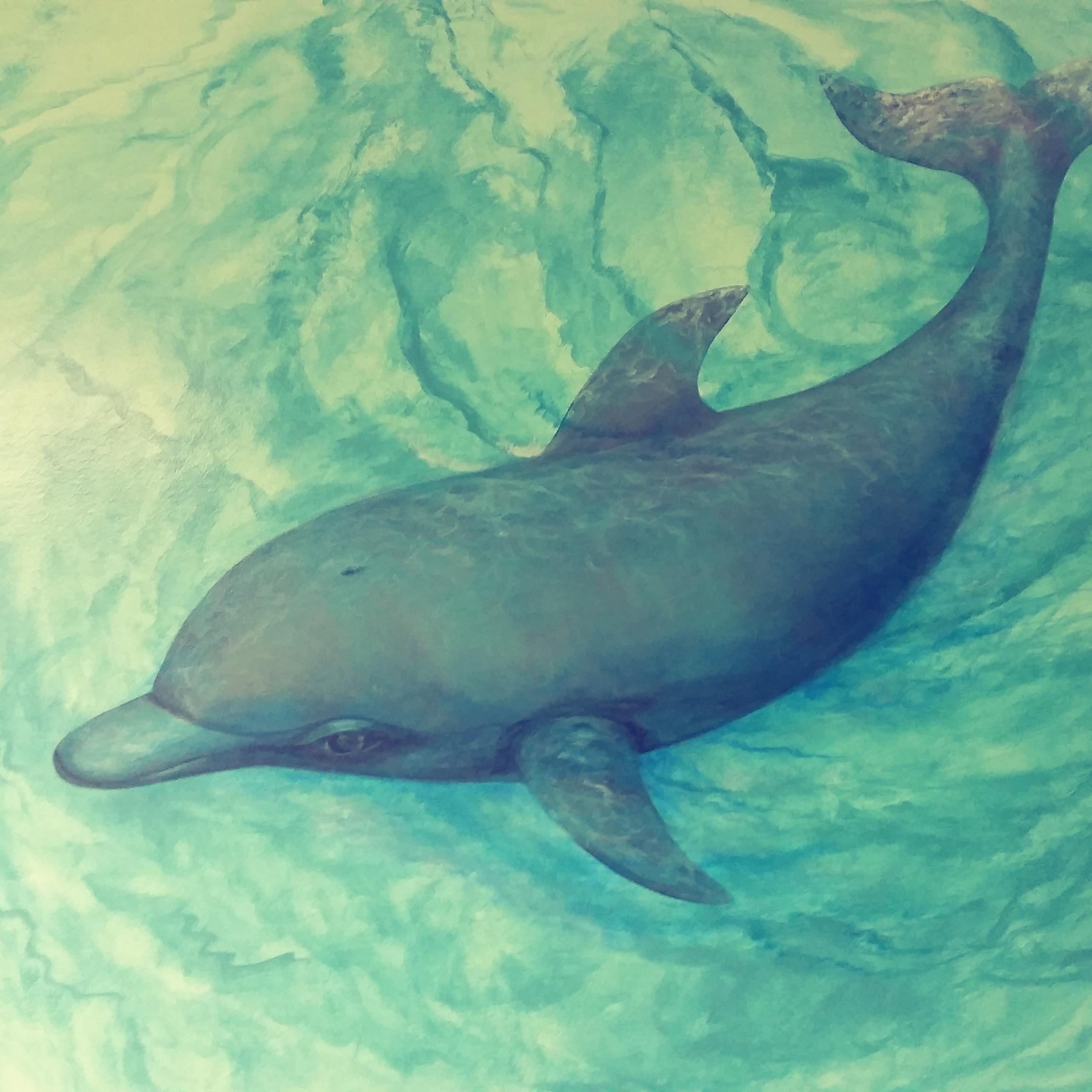 under sea dolphin