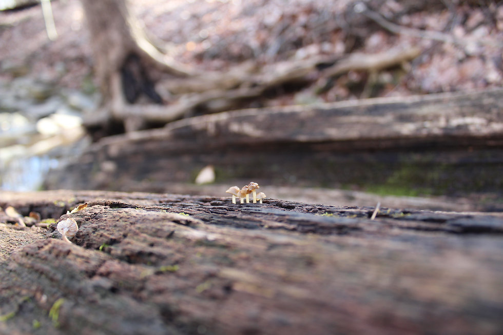 teeny tiny mushrooms (1).JPG