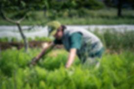 Agriculteur restaurant biologique de saison Jardin en équilibre slowfood