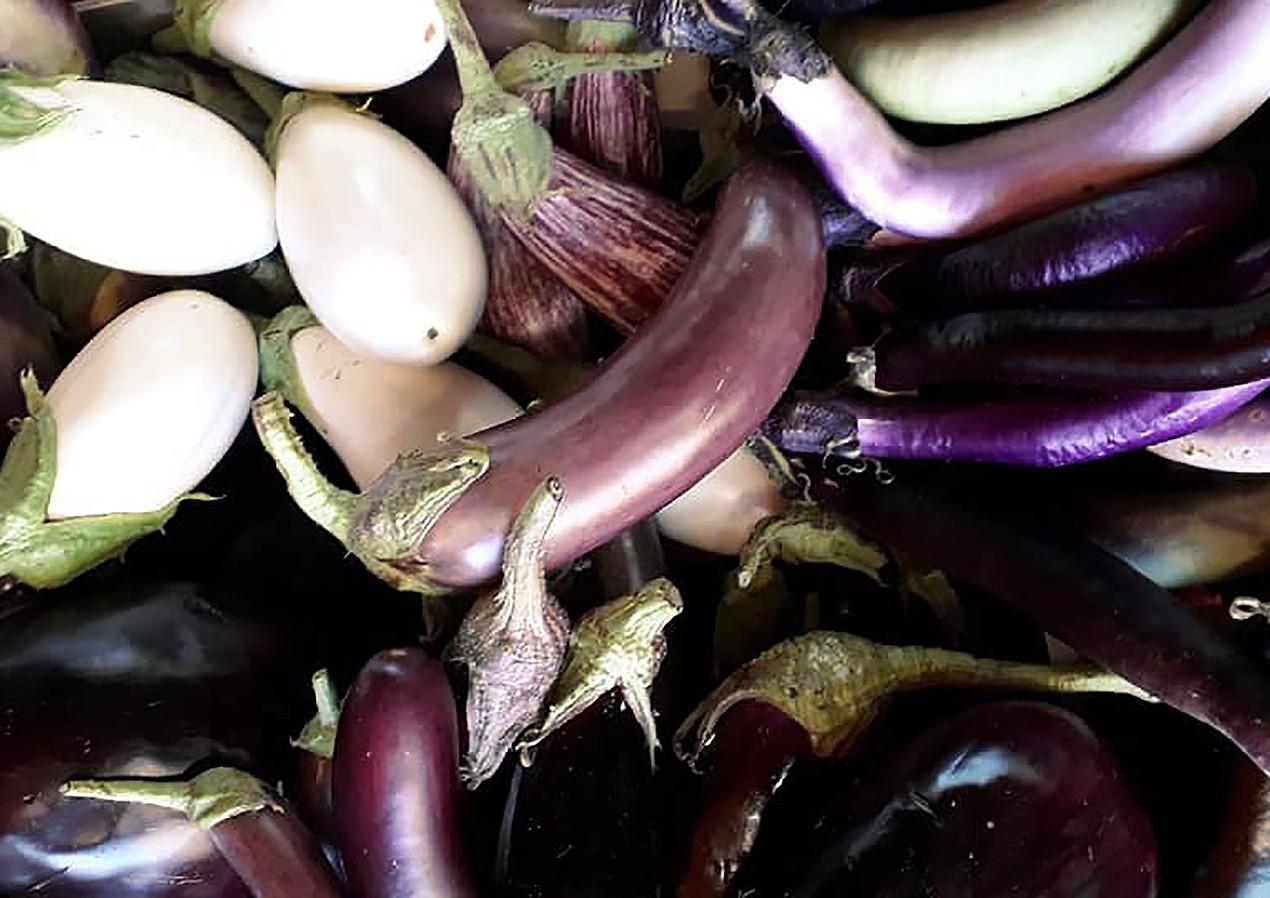 Les aubergines, semences anciennes