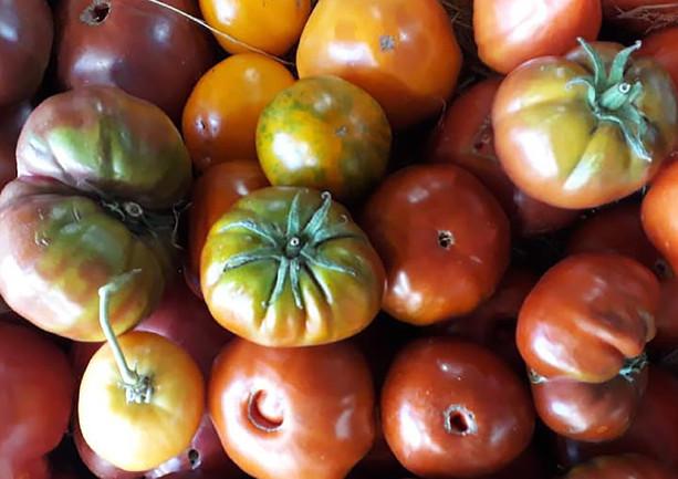 Tomates, semences anciennes