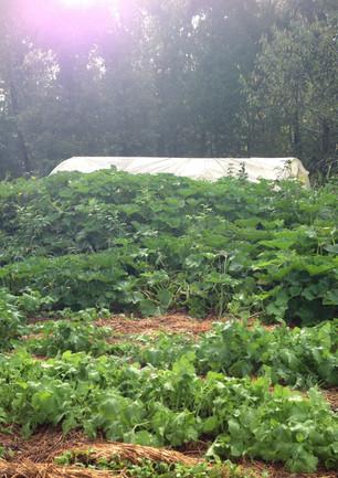 jardin de la canopée