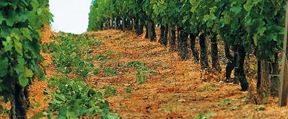 vineyard equipment maintenance viticulture spraying weeding