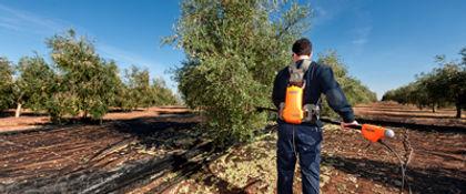 olivion olive harvesting rake olive growing equipment harvester green
