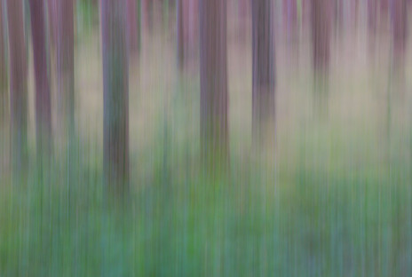 'Forest Abstract' by Colette Andrews, Ards Camera Club