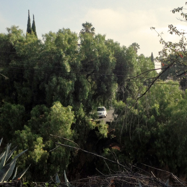 Trees with Car, Los Angeles