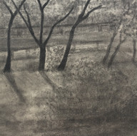 Trees & Light