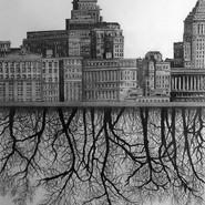 New York/Trees