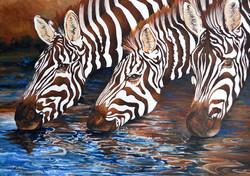 Zebras drink at the waterhole