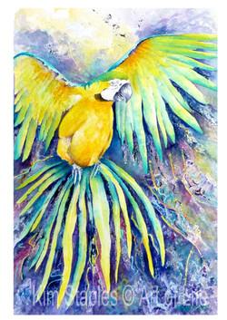 Macaw_in_flight