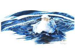 Seagull_bath_time
