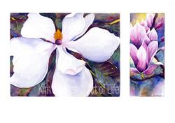 Magnolias_in_bloom