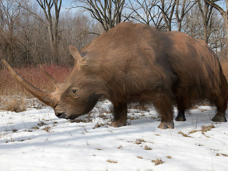 Ancient genomes suggest woolly rhinos went extinct due to climate change, not overhunting