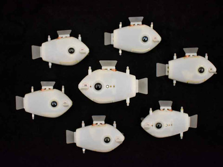 Swarms of robotic fish can synchronize their swimming, for the first time
