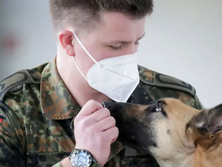 German sniffer dogs detect COVID-19 with 94% accuracy