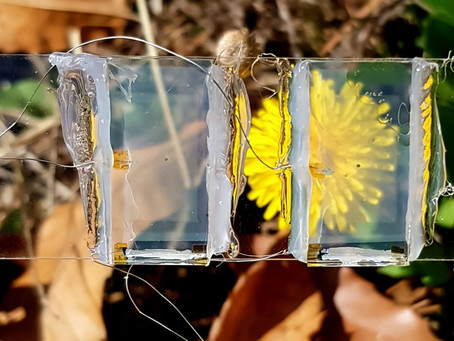 Take a Look Through the Clear Solar Panel of the Future