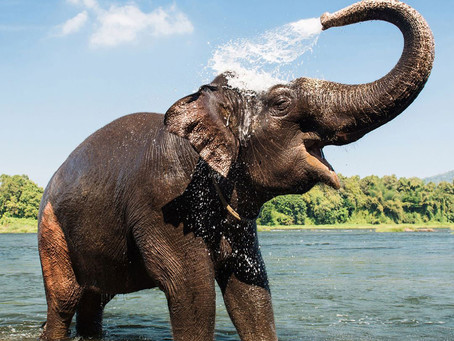 How an elephant's trunk manipulates air to eat and drink