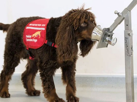 Dogs Can Detect Over 90% of COVID-19 Cases, Even Asymptomatic Ones