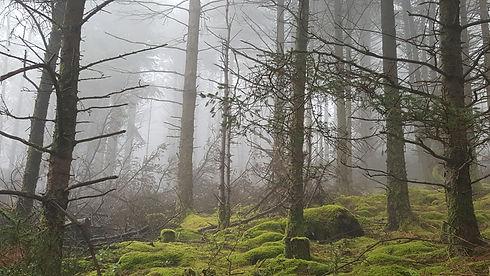 Tara hill fog and trees