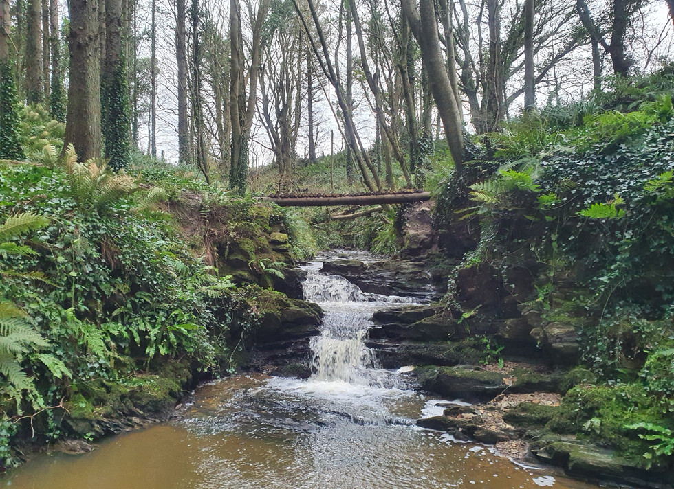 Courtown woods