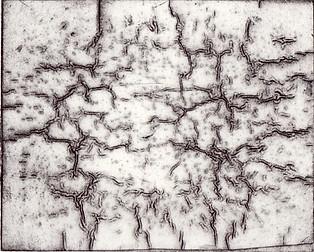 Mitosis.JPG
