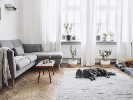 Transforming Your Living Room into an Allergy-Free Zone