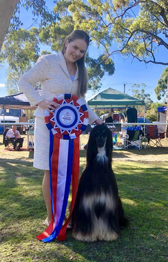 Best in Show 1st!