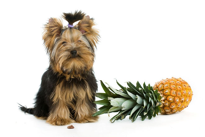 dog_and_pineapple_header.jpg