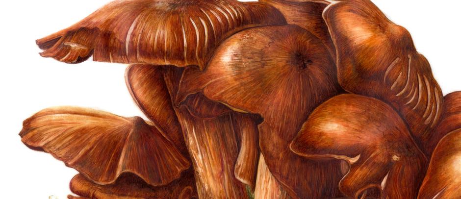 Jack o'lantern mushroom