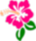 hibiscus-hi.png