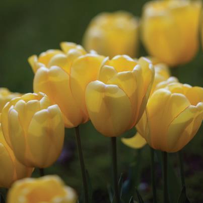 Pretty+flowers.jpg