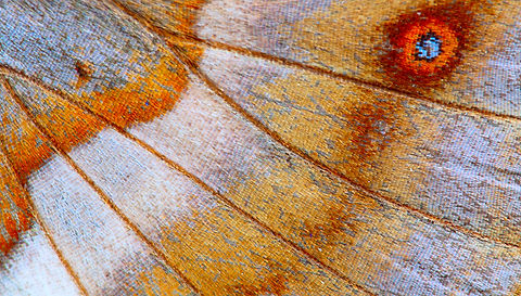 abstract background - wing of butterfly