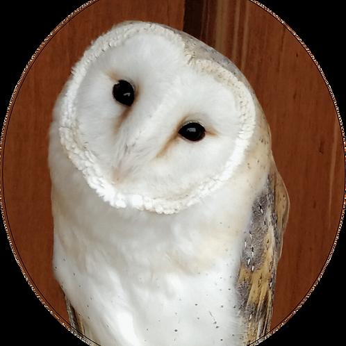 1½ Hour Bird of Prey Experience