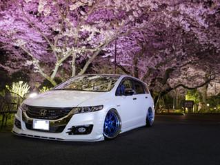 Spotlight: Sakura RB3 Honda Odyssey