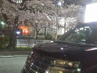 Spotlight: Sakura Nissan Elgrand Autech Rider