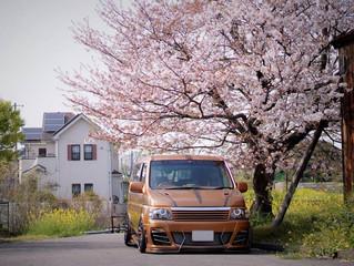 Spotlight: Sakura Stepwagon