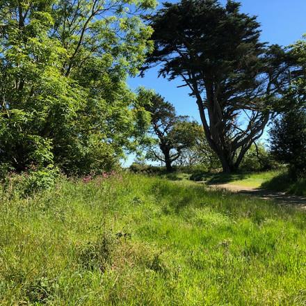 Land at Trecadwgan Farm