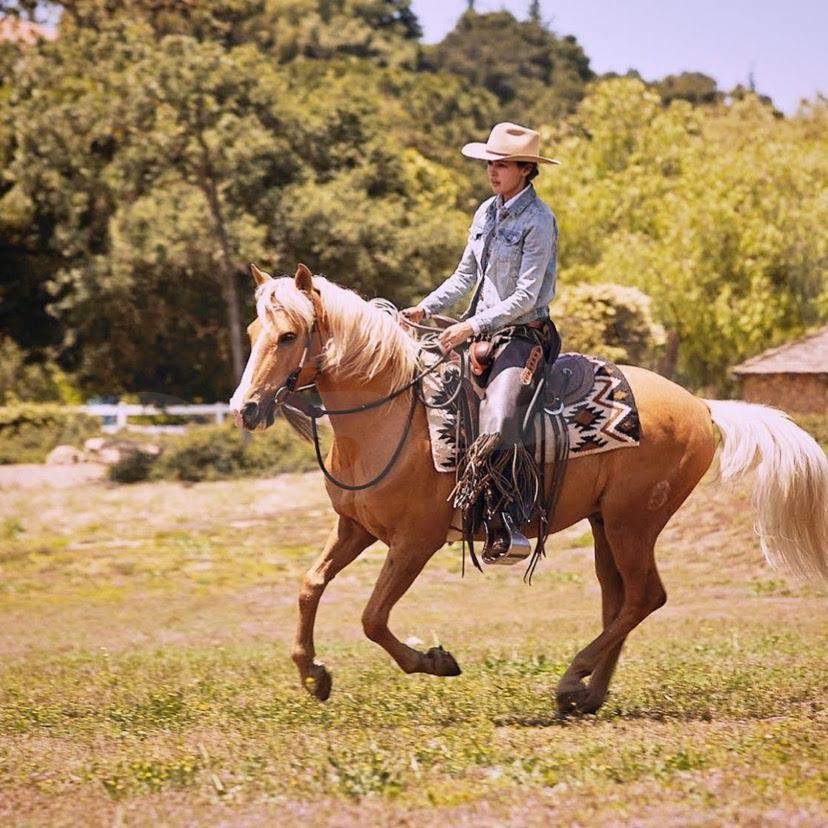 Santa Cruz Island HorseG_3818