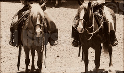Santa Cruz Island Horses- Cochise and Prancer - Early California Skills of the R