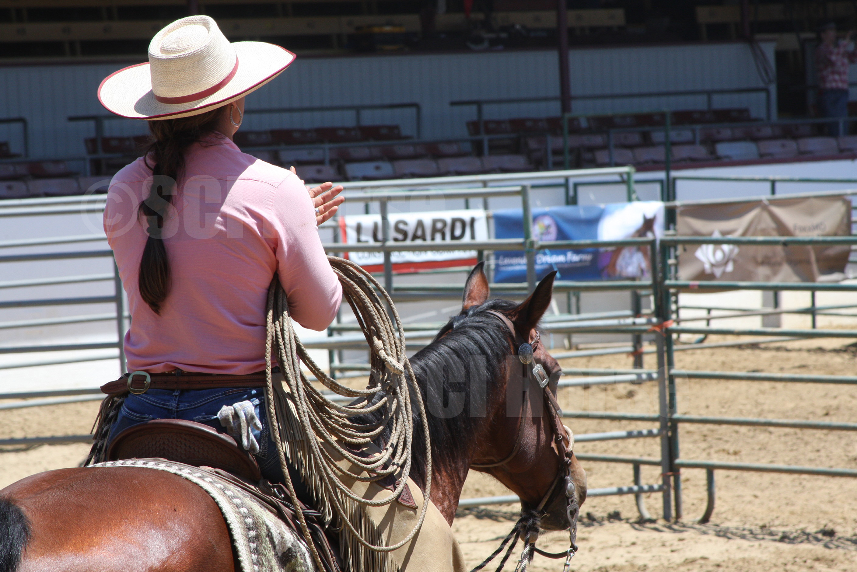 Santa Cruz Island Horse