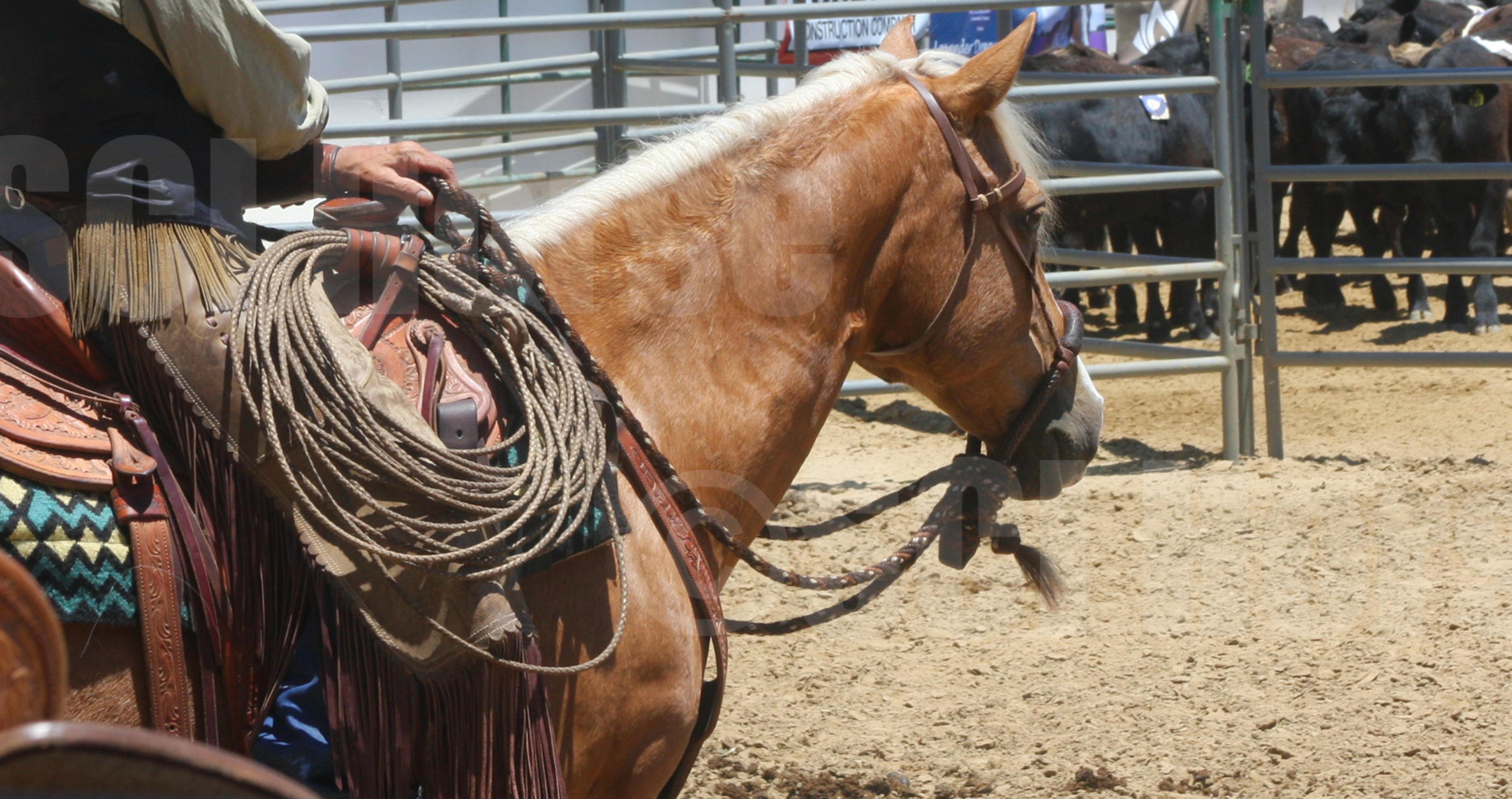 Santa Cruz Island Horse Cochise & Jeff Ohaco - Larura Fullilove 2015.jpg