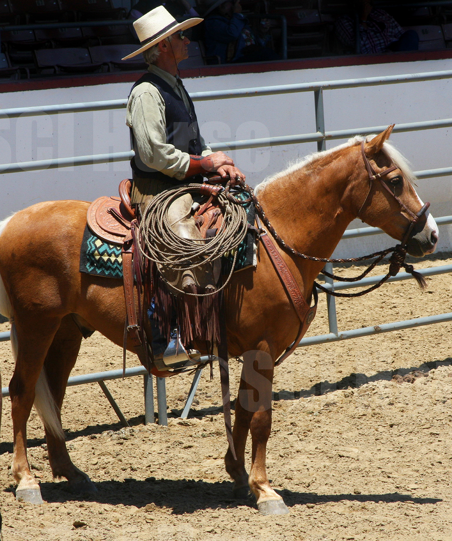 Santa Cruz Island Horse Cochise - Laura Fullilove 2015.jpg