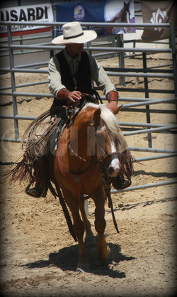 Cochise - Jeff Ohaco  Island Horse - Laura Fullilove 2015.jpg