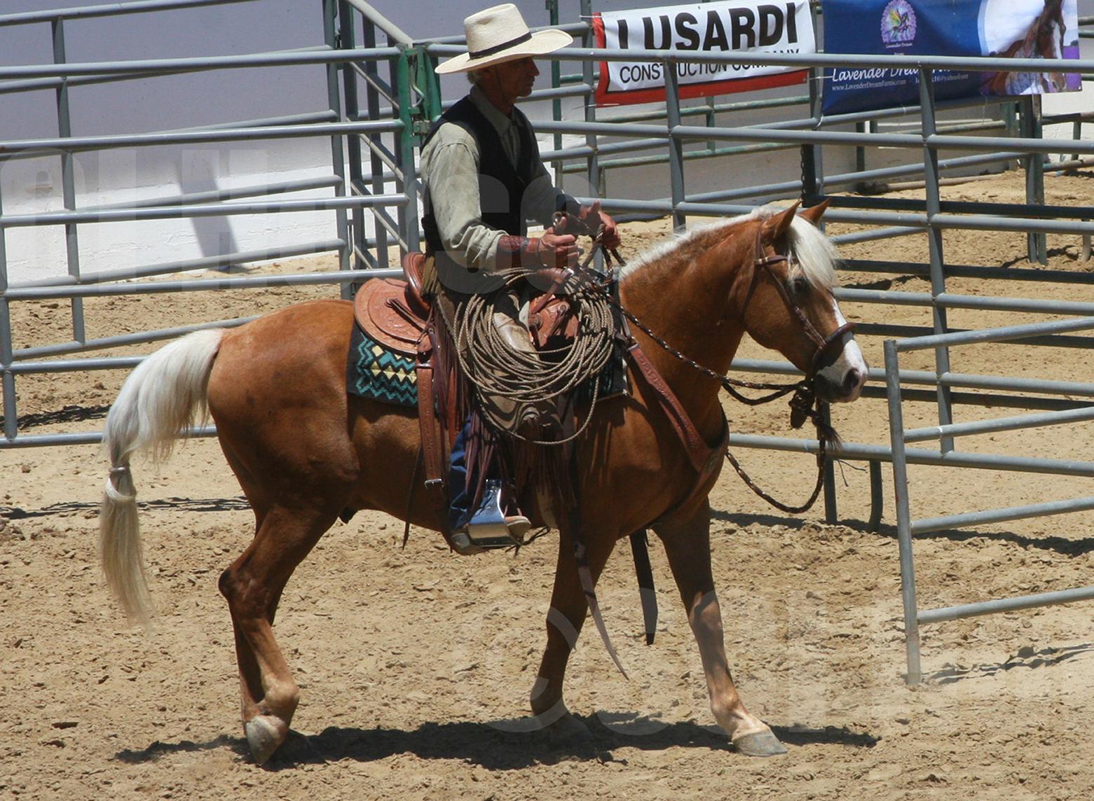 Jeff Ohace and Cochise - Santa Cruz Island Horse - Laura Fullilove 2015.jpg